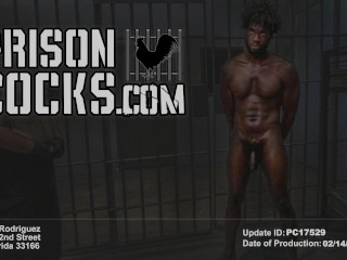 PRISON COCKS – After Picking Up Trash, This Inmate Sucked My Dick In Public